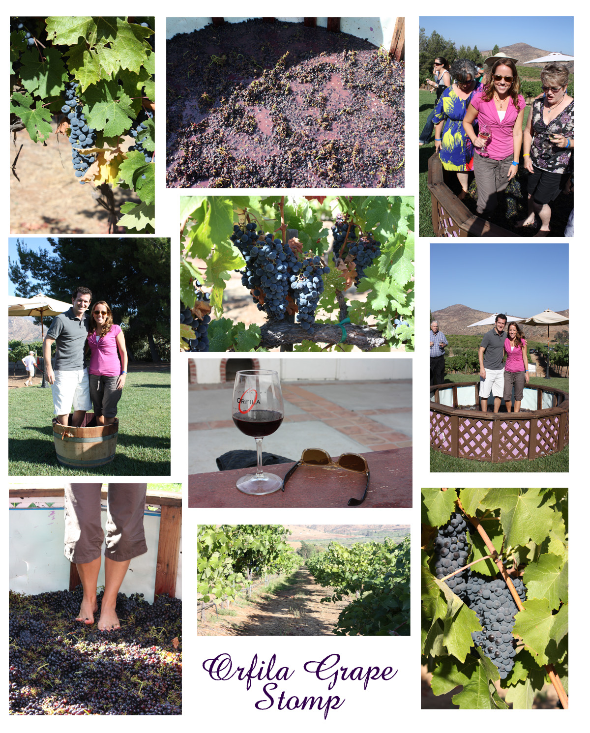 Orfila Grape Stomp